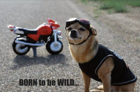 Giggles by Gigi Born to be Wild Poster